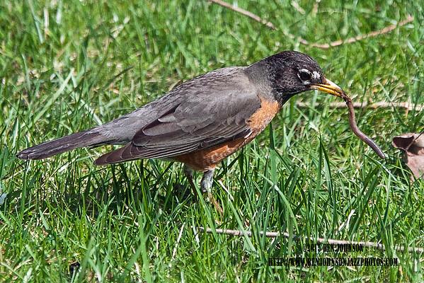 Birds, Birds and More Birds
