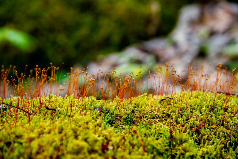Moss growth on tree stump.jpg