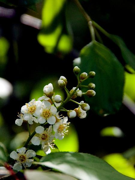 clip-015-flower-wdsm-07apr12-001-0213.jpg