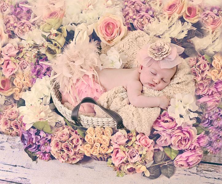 chloe cat.jpg