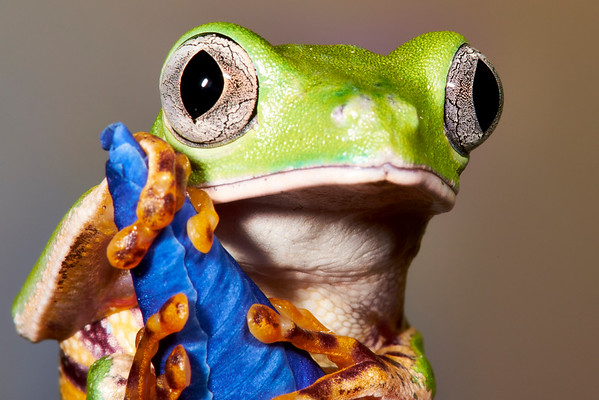 Macros: Amphibians, Reptiles and a few