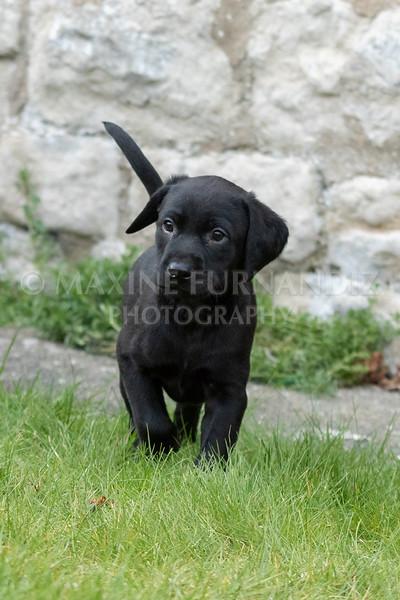 Weika Puppies 24 March 2019-6432.jpg
