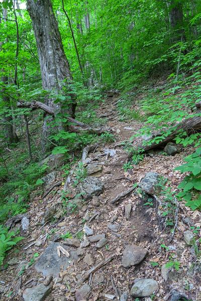 Greasy Cove Trail -- 4,600'