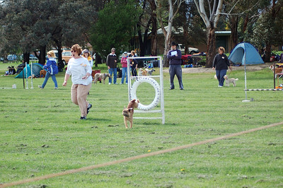 Dog Agility, Knox, 1 Oct. 2005