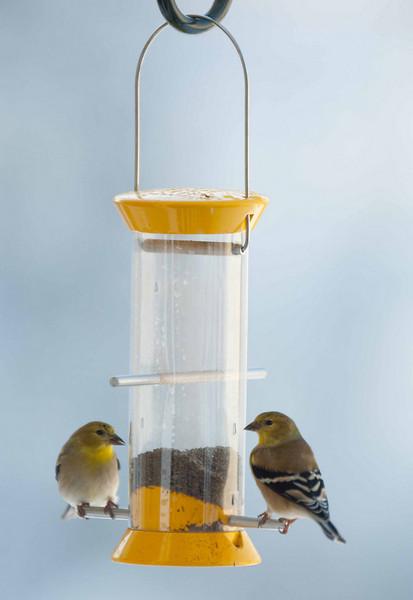 Finch2.jpg