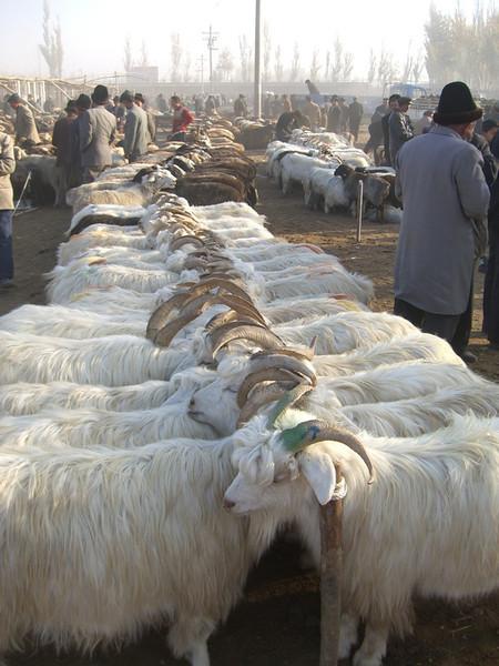 Goats at Kashgar Animal Market - Kashgar, China