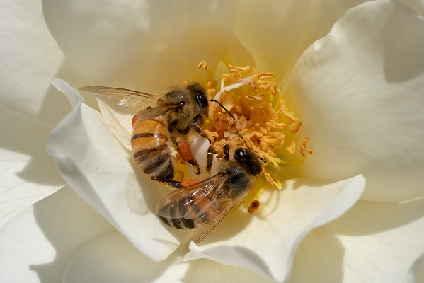 Bees and Insects 2018