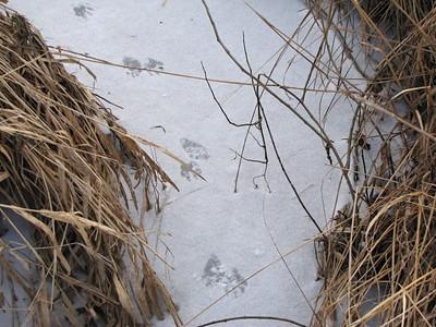 20100202 Mammal Tracks