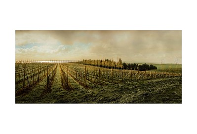 Anne Ramus - Winter Vineyard, Bellarine Peninsula