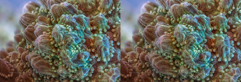coral15_stereo.JPG