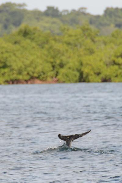 Bocas del Toro Boat Tour 13.jpg