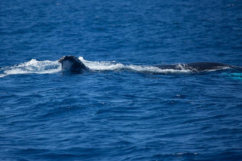 whales-leila-73.jpg