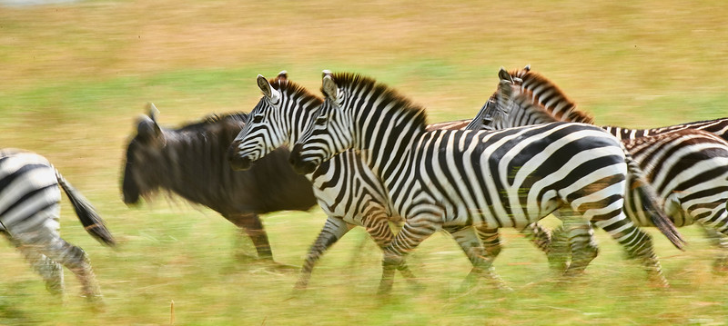 Tanzania selection 201.jpg