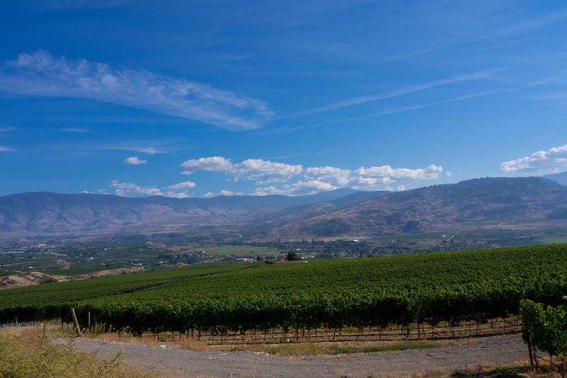 hills vineyard 2.jpg