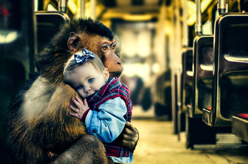 The Maternal Monkey