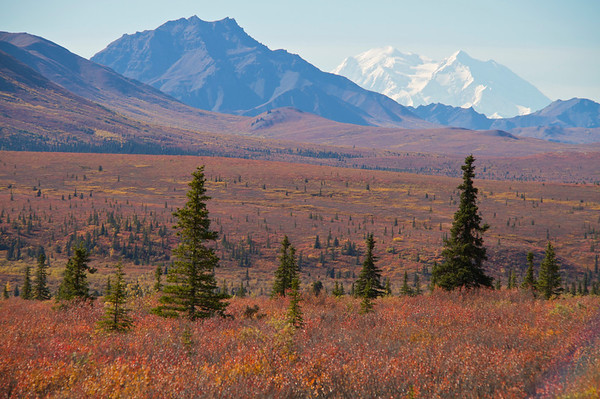 Denali Autumn Tapestry