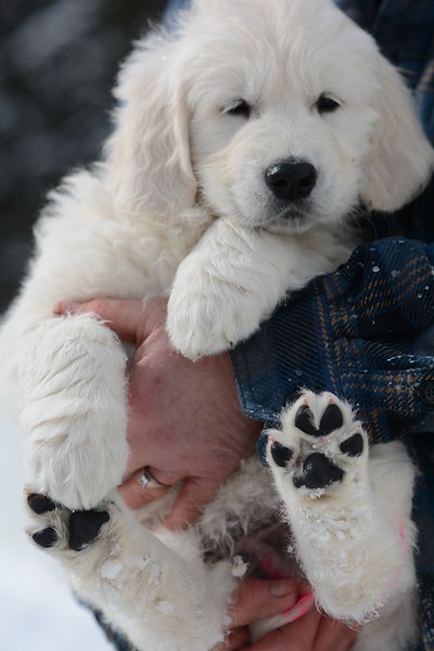 What a handful of Puppy Love.