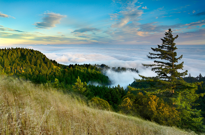 The wind bent the trees and grasses as the fog rolled quickly over the lower hills at Mt Tamalpais on a late spring evening.  Most of the time when there is low ocean fog, the skies are clear, so seeing higher clouds in the sky is a rare event.  I used a 1/2-second exposure to show a little motion in the fog and the foreground grasses.  I like including motion whenever possible even if it is extra work.  I had to shelter the camera and tripod with my body in order to avoid camera shake.