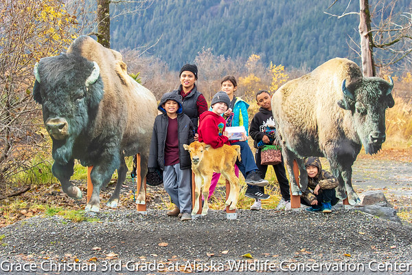 Grace Christian 3rd Grade trip to Alaska Wildlife Conservation Center
