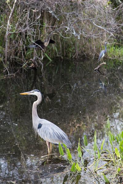 Everglades NP-0338-Select_E.jpg