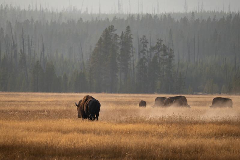 Yellowstone-32.jpg