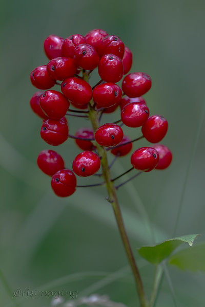 IMG_8442 berry.jpg