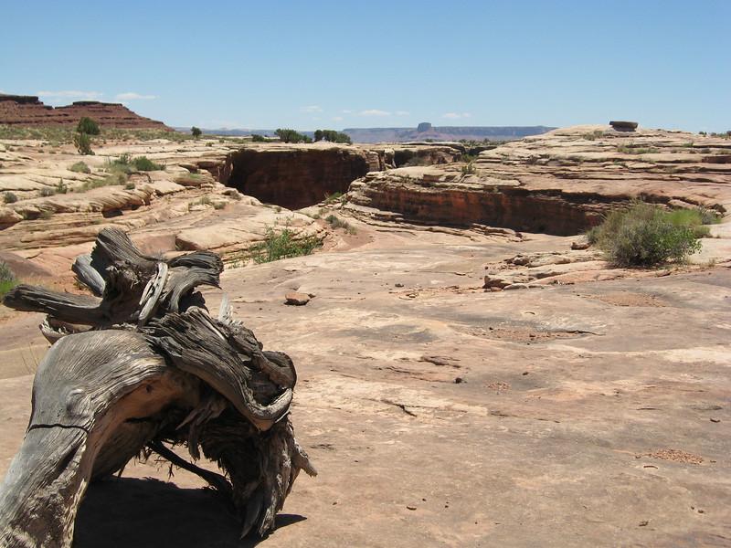 It's a desert!
