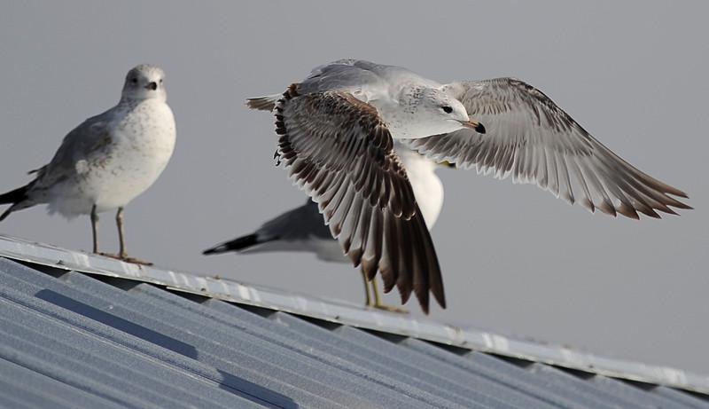 TCL birds 02.jpg