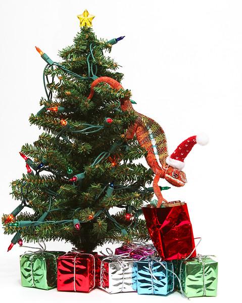 Opening Christmas Present.jpg