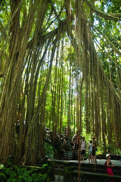 Bali - Ubud walk (9 of 31)