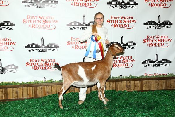 All American Dairy Goat Show