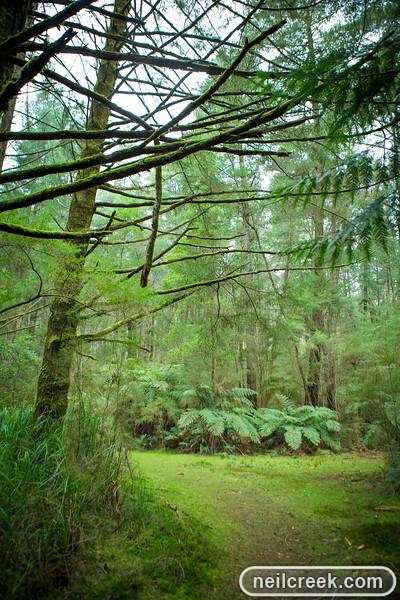 creek-140819-149.jpg