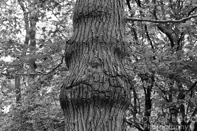 17th June Hockley Woods