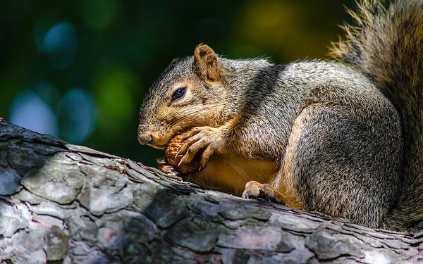 Squirrels, Squirrels, Squirrels