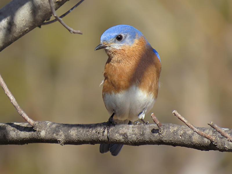 sx50_bluebird_bit_110.jpg