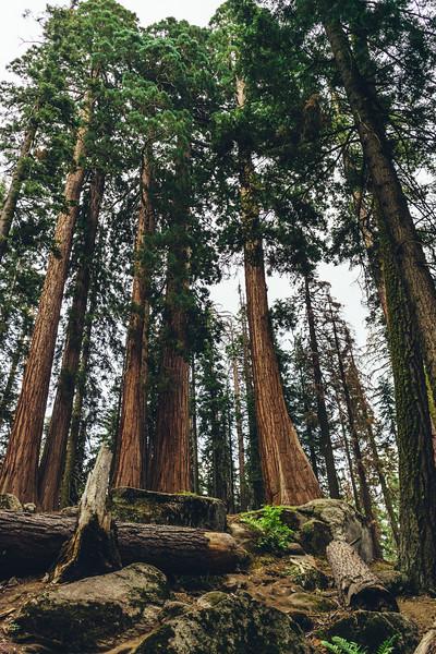 Rui in Sequoia-06922.jpg