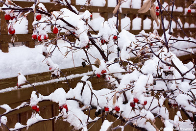 Backyard winter 2011