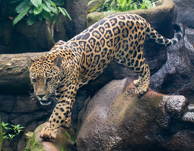 Jaguar WatGard_12-10-16__MG_4001