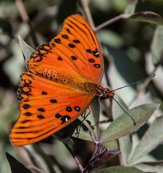 Butterflies-7.jpg