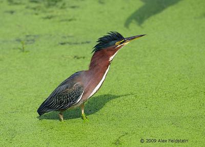 Green Cay Wetlands, Delray, Florida
