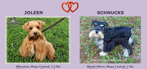 Joleen & Schnucks Puppy, DOB 3/27/2021