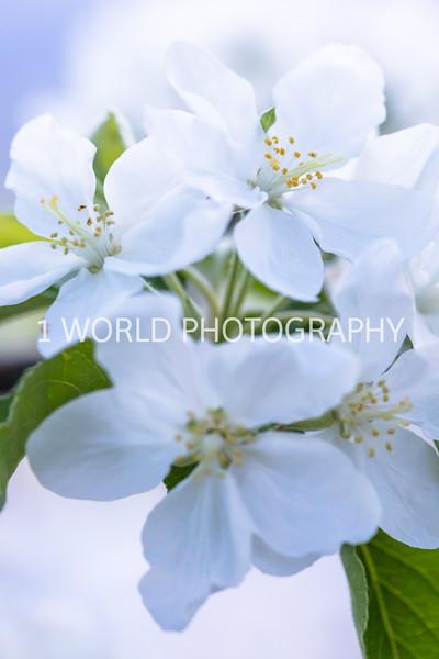 201905152019 Neighborhood Blossoms100--154.jpg