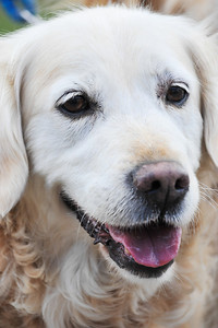 Dogs 2013-0914