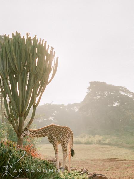 Safari-Africans-124.jpg