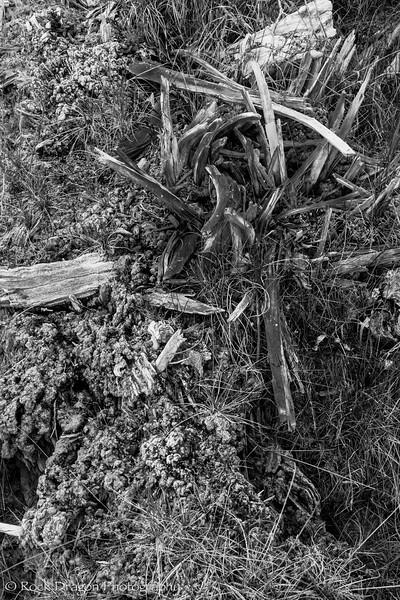 Kootney_Plains-12.jpg