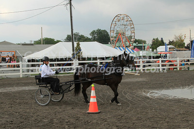 Obstacle Driving Pony, d13