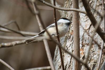 Birds at Arcadia