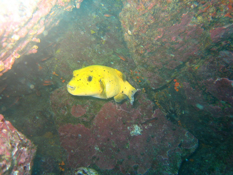 Diving in the Galapagos (318 of 392)