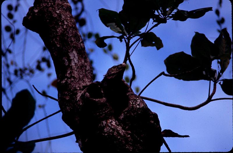 MadagasgarCostaRica2_086.jpg
