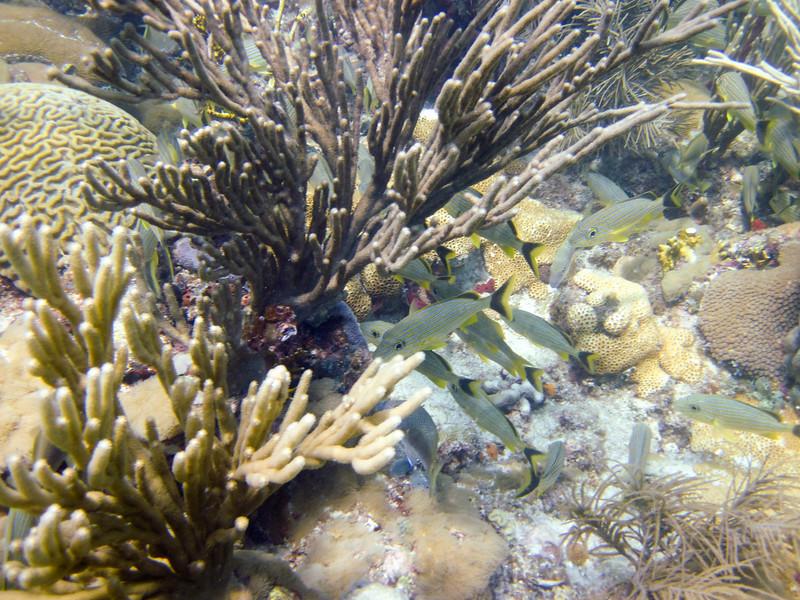 islamorada-diving-40.jpg